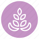 allergens, flower, food, lupin, lupin seed, nature, plant icon