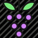 fruit, grapes