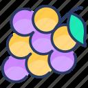 agriculture, food, fruit, grapes, natural, vine, wine