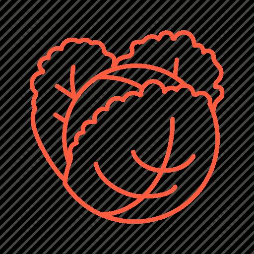 cabbage, cafe, food, market, restaurant, vegan, vegetable icon
