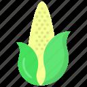 corn, maize, pole corn, sugar corn, sweet corn