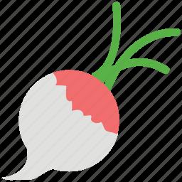 food, fresh, nature, rutabaga, turnip, vegetable icon