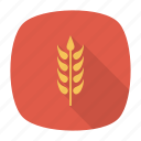 crop, grain, plant, wheat icon