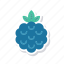 blueberry, eat, fruit, healthy icon