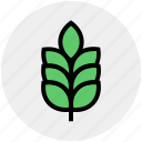 agriculture, cereal grain, farm, food, grain, grain ear, wheat icon