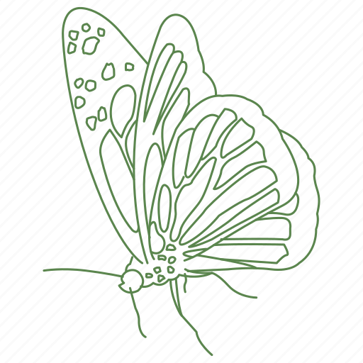 butterfly, fly, insect, wings icon