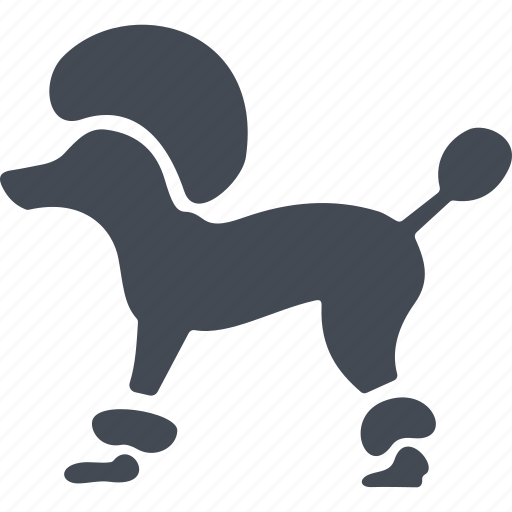 animal, dog, france, poodle icon