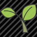 herb, leaf, vegetable