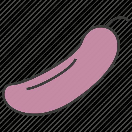 eggplant, fruit icon