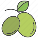 fruit, kiwi, mango icon