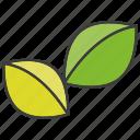 herb, leaf
