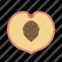 food, fruit, juicy, peach, plant, stone