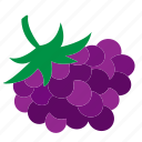 bunch of grapes, grape, grapes, healthy food, wine, wine grapes icon