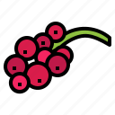 red, berry, food, currant, fresh, fruit icon