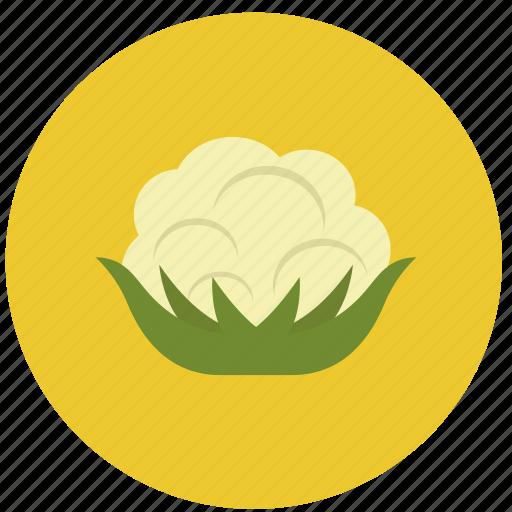 cauliflower, food, organic, vegetable icon