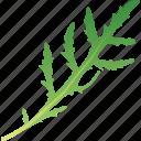 arugula, food, greenery, healthy, spice, vegetarian icon