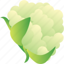 cauliflower, food, healthy, vegetable, vegetarian icon