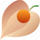 berry, food, fruit, healthy, physalis, vegetarian icon