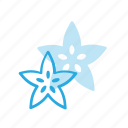 carambola, food, friut, health, healthy, star, starfiut icon