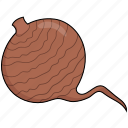 beetroot, food, vegetables icon
