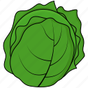 cabbage, green, vegetable icon
