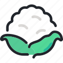 cauliflower, diet, food, gastronomy, healthy, vegetable icon