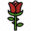 blossom, botanical, cultures, flower, nature, petals, rose