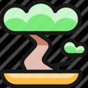 bonsai, interior, tree, asian