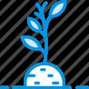 soil, plant, flower, garden
