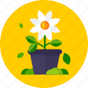 flower, flower pot, garden, leaves icon