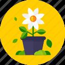 flower, flower pot, garden, leaves