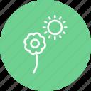 flower, sun, garden, gardening, greenery