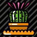 cactus, floral, flower, plant, succulent