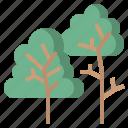 natural, nature, shape, shapes, treeplant, trees icon