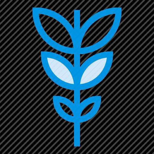 cactus, coffee, ecology, gardening, nature, plant, summer icon