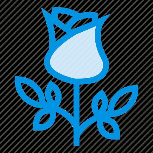 ecology, floral, flower, garden, leaf, plant, rose icon