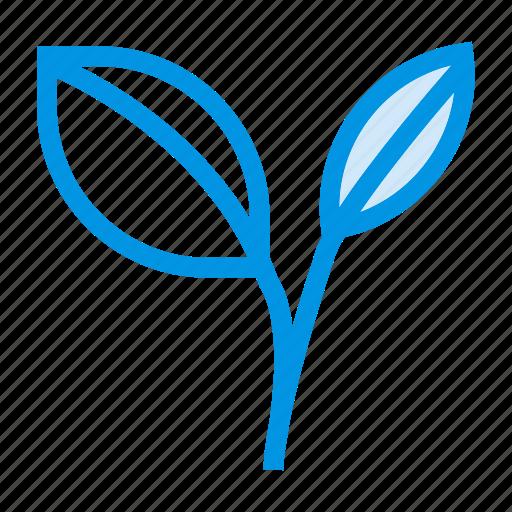 agriculture, botanic, foliage, leaf, natural, nature, plant icon