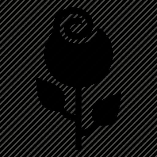 floral, flower, garden, nature, petals, plant, rose icon