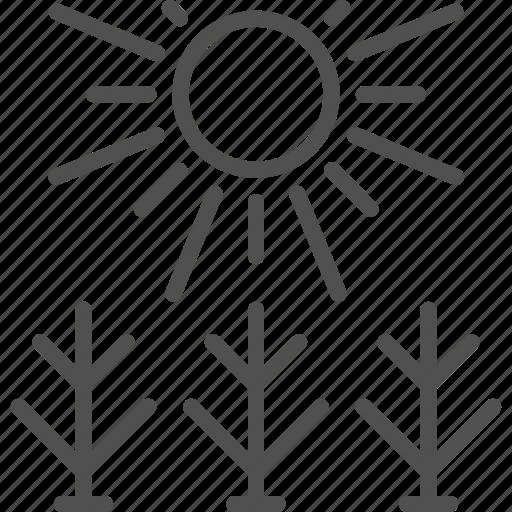 farm, farming, field, garden, gardening, shine, sun icon