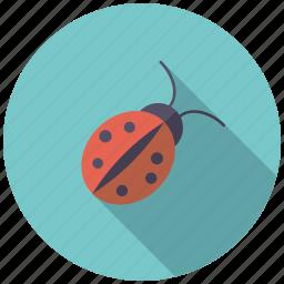animal, garden, gardening, insect, ladybug icon