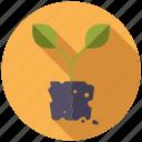 garden, gardening, plant, soil, sprout