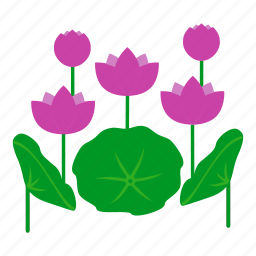 blossom, botanical, flowers, garden, leaves, lotus, nature icon