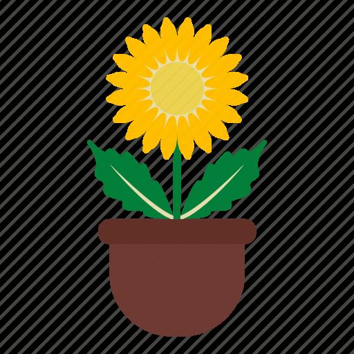 blossom, daisy, flower, garden, leaves, nature, pot icon