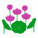 garden, nature, blossom, leaves, lotus, flowers, botanical