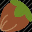 hazelnut, nuts, protein, snack icon