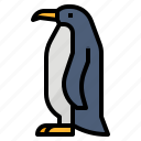 animal, aquatic, bird, penguins icon