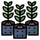 green, growth, plant, tree