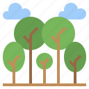botanical, forest, garden, nature, pines, tree, trees