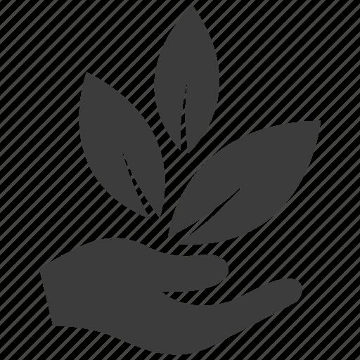 business, idea, startup, tree icon