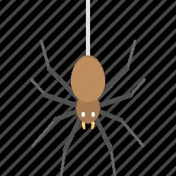 arachnid, hanging spider, insect, spider, web spider icon